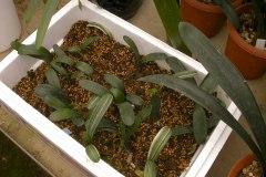 8-Sasakis-seedlings