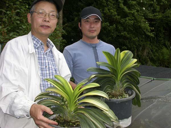 ah. Yoshikazu Nakamura and Shige Sasaki with variegated daruma
