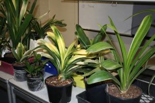 display-plants1