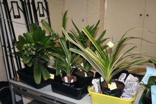 display-plants2