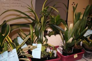 display-plants3
