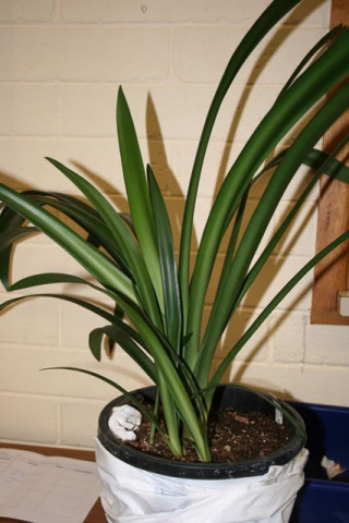 display-plants4