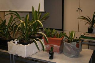 display-plants6