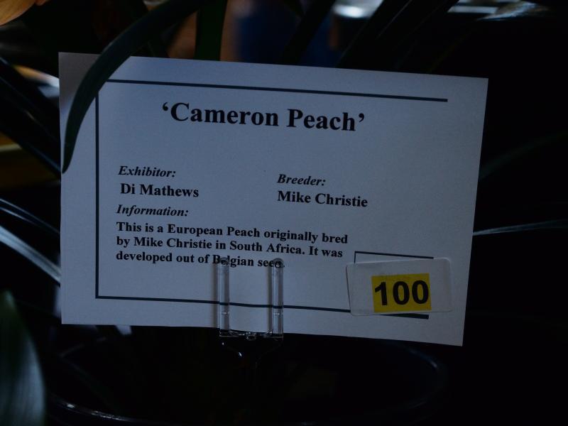 DM-cam-peach1