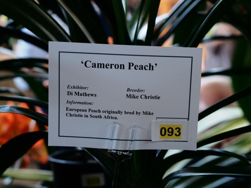 DM-cam-peachb1