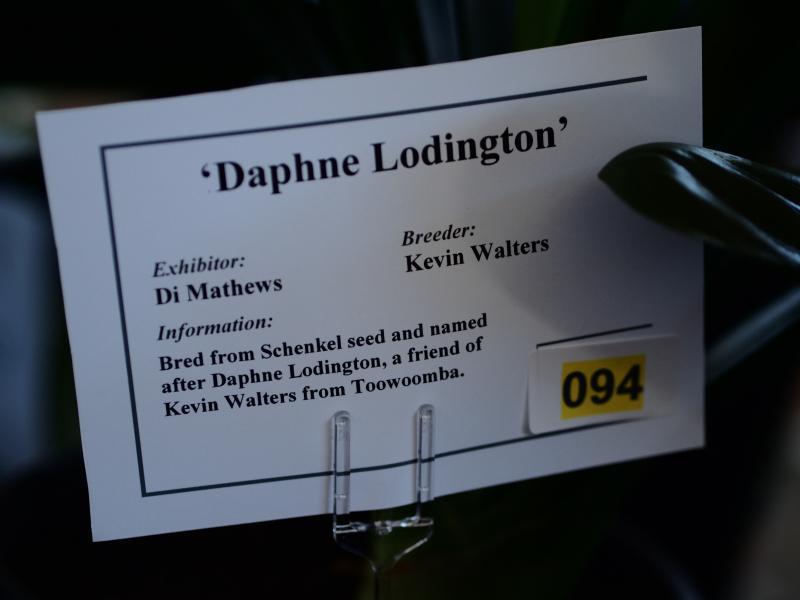 DM-daphne1