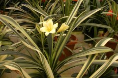 7-area-for-variegates